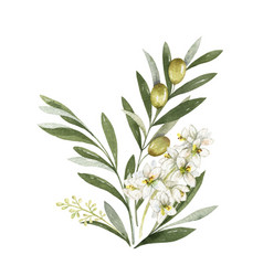 watercolor bouquet olive branches and vector image