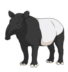 Color of a malayan black tapir vector