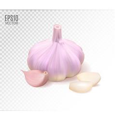Isolated garlic raw garlic with segments vector