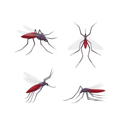 mosquitos detailed color cartoon vector image