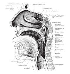 Section of the head and neck vintage vector