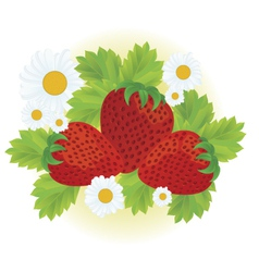 Strawberries and daisy flowers vector image