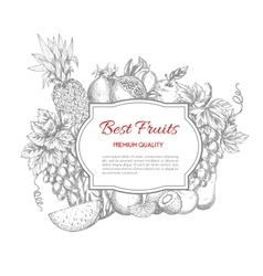 Best fruits sketch poster vector image vector image