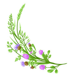 Decorative element with herbs and cereal grass vector