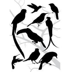 silhouettes tropical birds vector image