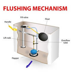 flushing mechanism Flush toilet vector image vector image