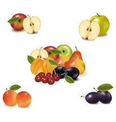 big group with six fruit vector image vector image