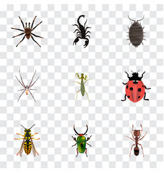 Realistic arachnid poisonous ladybird and other vector