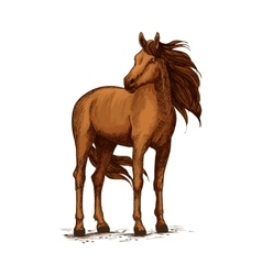 Sketch of horse standing wild mustang or stallion vector