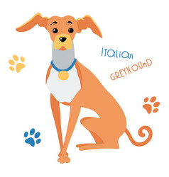 sketch funny italian greyhound dog sitting vector image