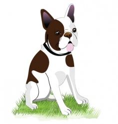 boston terrier vector image vector image
