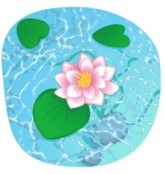 blooming lotus on shining water vector image