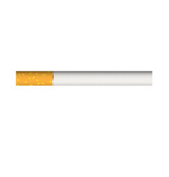 cigarette with traditional filter close up vector image