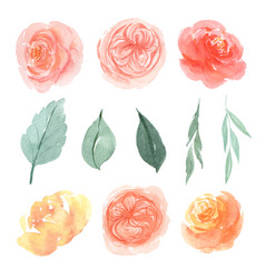 floral and leaves watercolor elements set hand vector image
