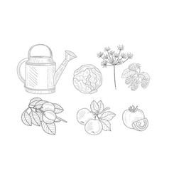 Garden elements set watering can cabbage dill vector