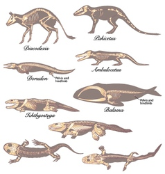 Paleontology vector
