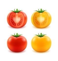 Set ripe red yellow green cut whole tomatoes vector