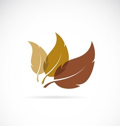 leaves icon vector image vector image