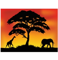 Safari background vector image vector image