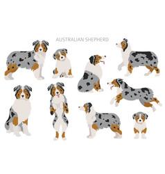 Australian shepherd dogs set color varieties vector