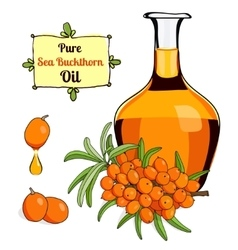 colorful of Sea Buckthorn oil 2 vector image