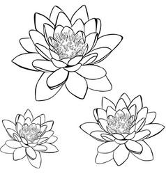 Painted contour lily vector
