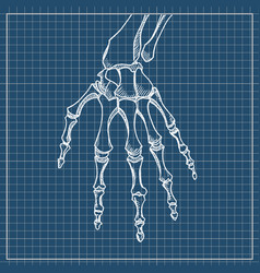 skeleton hand sketch with hand bones vector image