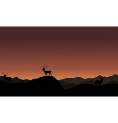 At sunset antelope landscape silhoutte vector image