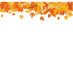 autumn template with golden maple and oak leaves vector image
