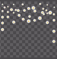 Garland made of camomile on transparent backgroun vector