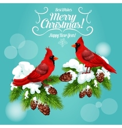 Christmas card with cardinal bird on pine tree vector image
