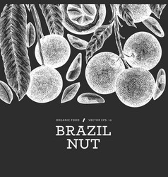Hand drawn brazilian nut branch and kernels vector
