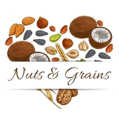 Heart made up of nut grain seed and bean vector image