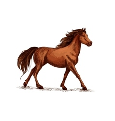 Horse or stallion mustang running sketch vector