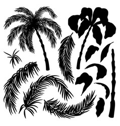 set with palm leaves and palms vector image