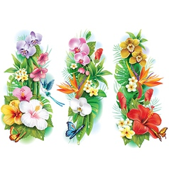 Arrangement from tropical flowers and leaves vector image vector image