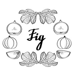 calligraphy monochrome fig poster logo vector image