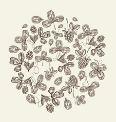 Circle pattern bunches of hop doodle vector