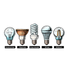 Evolution set light bulb vector