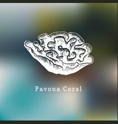 pavona coral drawing sea vector image