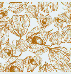 physalis graphic isolated on light vector image