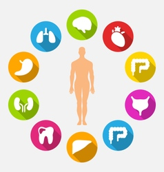 Silhouette of Male and Internal Human Organs vector image