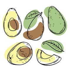 Avocado delicious fruit sketch style vector