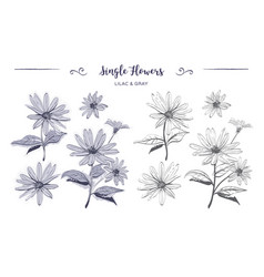hand drawn flowers sketch chamomiles daisies vector image