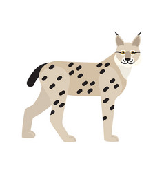lynx or bobcat isolated on white background vector image