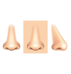 nose isolated vector image vector image