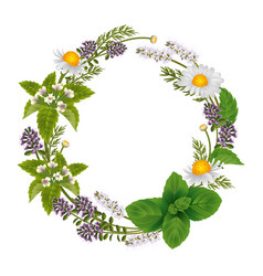 round ornament of herbs and flowers for labels of vector image vector image