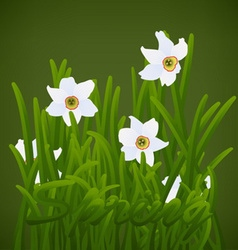 Spring flowers white narcissuses vector image