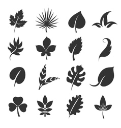 Tree leaf silhouettes Leaves vector image