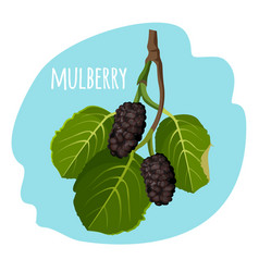 Mulberry with green leaves isolated on blue vector